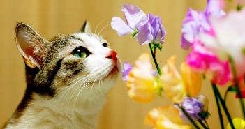 День эрмитажного кота в 2018 году