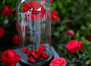 Роза в колбе, фото