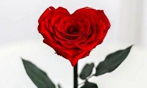 Роза в форме сердца, фото