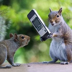 Белки с телефоном, фото