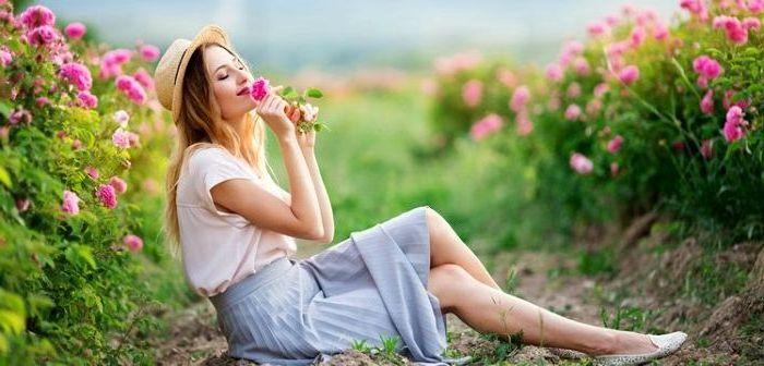 Полевые цветы, фото